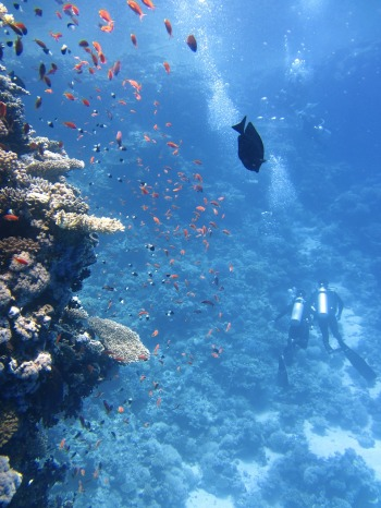 divers_lpittman_pixabay.jpg